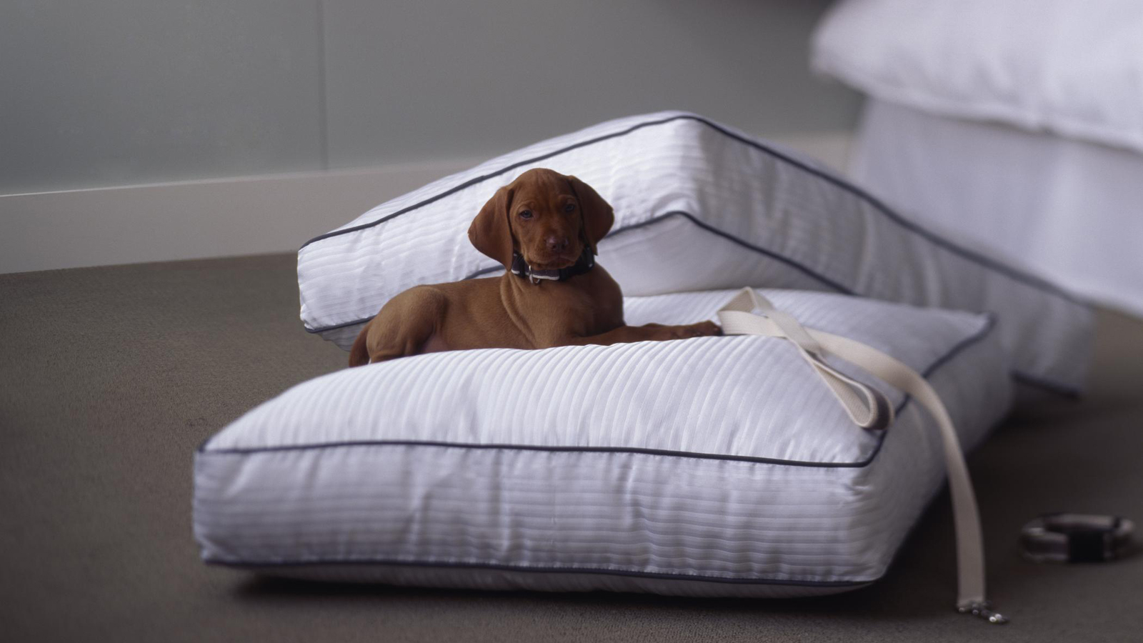 The Westin Grand Hotel Berlin Heavenly® Dog Bed